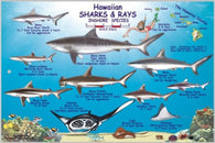 Buy map Hawaiian Sharks and Rays Offshore and Inshore Species by Frankos Maps Ltd.