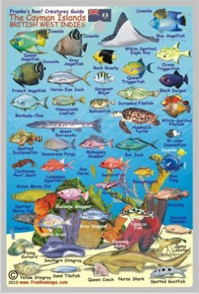 Buy map Caribbean Fish Card, Cayman Islands Mini 2010 by Frankos Maps Ltd.