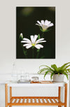 Flower Wall Art: Two White Flowers (Wood Frame Ready To Hang)