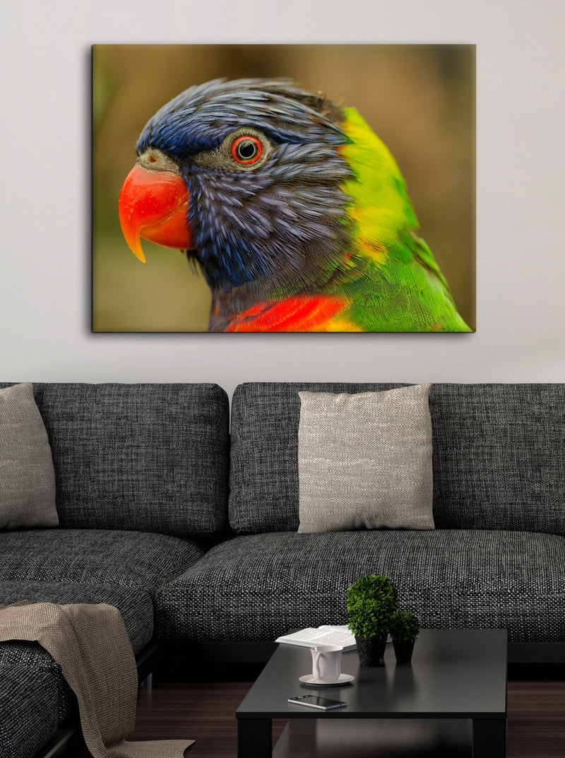 Bird Wall Art: Paraquet (Wood Frame Ready To Hang)