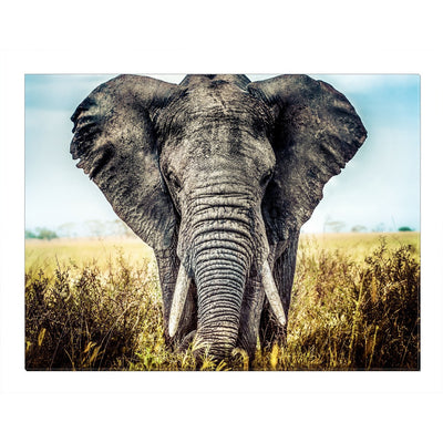 Home Wall Art: Stunning Elephant Canvas (Wood Frame Ready To Hang)