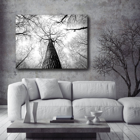 Black & White Wall Art :  Black/White Tree Trunk (Wood Frame Ready To Hang)