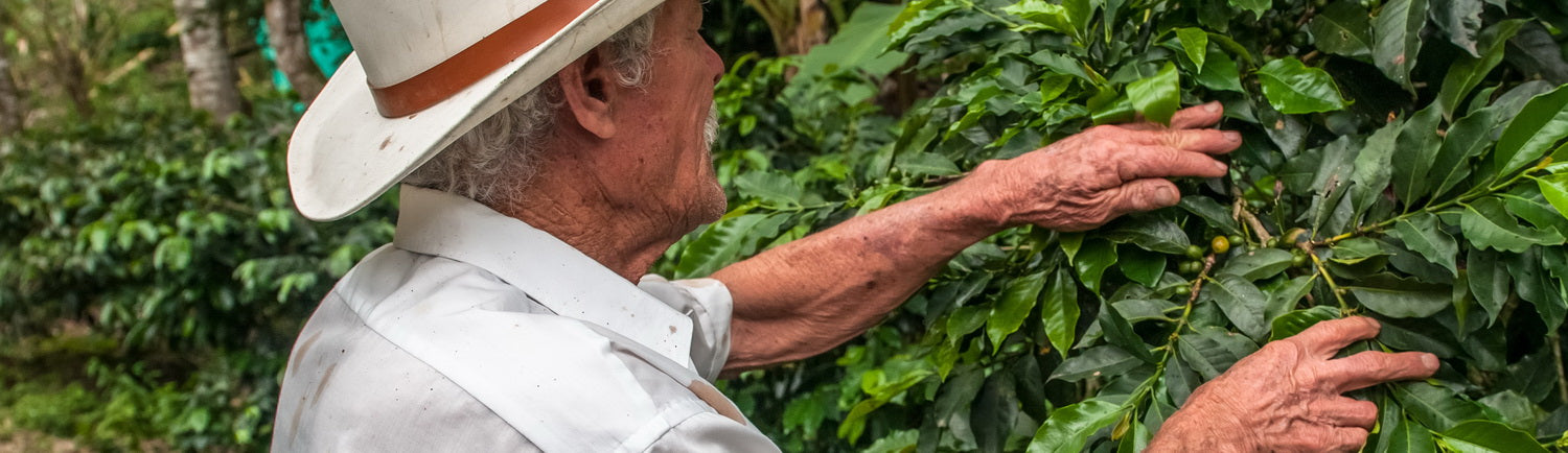 Coffee farmer who deserves support by anyone who wants to buy coffee online in Canada that is rated fair trade, Cafe Femenino and certified organic.