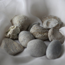 Load image into Gallery viewer, Sea Fossils - Song of Stones