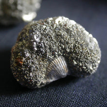 Load image into Gallery viewer, Marcasite Fossil Nodules - Song of Stones