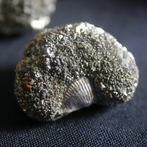 Marcasite Fossil Nodules - Song of Stones