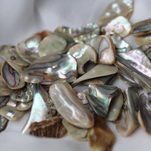 Paua Abalone Shell pair - Song of Stones