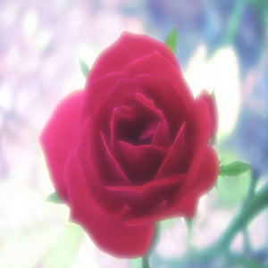High Frequency Rose Essential Oil sample - Song of Stones
