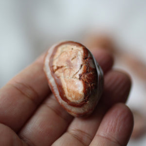 Sunset Agate Faery Eggs - Song of Stones
