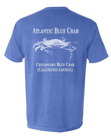 MBO Blue Crab