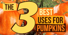 The 3 Best Uses for Pumpkins