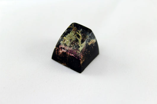 SA Row 1 - Deep Field - Lichen 1