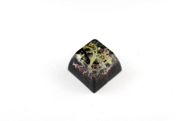 SA Row 3 - Deep Field - Lichen 1