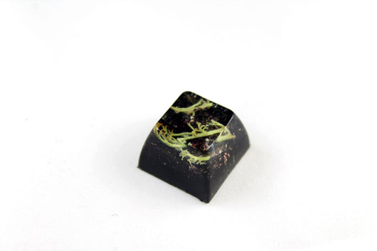 SA Row 3 - Deep Field - Lichen 3