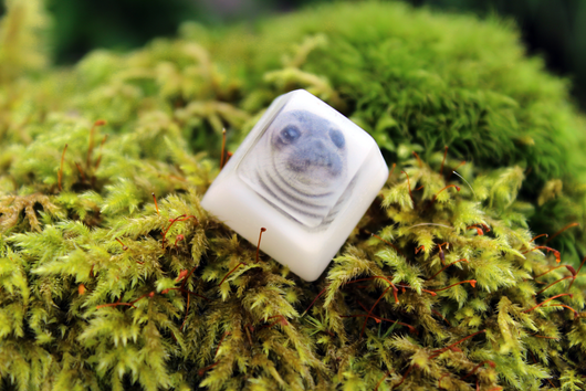 Chaos Caps 1.1 - Awkward Seal - PrimeCaps Keycap - Artisan Keycaps for mechanical keyboards