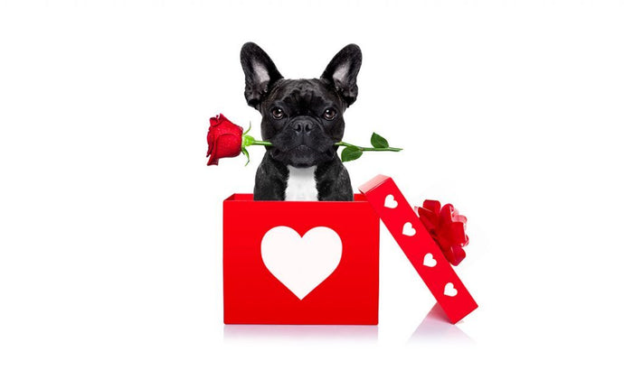 FRENCH BULLDOG VALENTINE'S GIFT IDEAS FOR TRUE FRENCHIE LOVERS