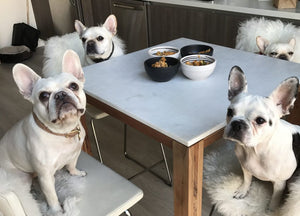 10 Raw Dog Food Recipes for French Bulldogs