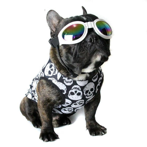 Frenchie Skull shirt for summer
