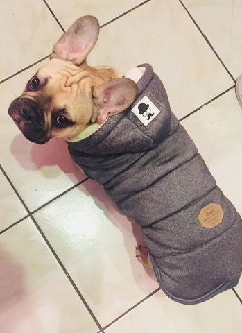Frenchie Winter Jacket