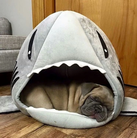 House for Frenchies (Shark Bed)
