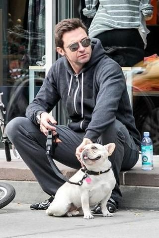 Hugh Jackman and his French Bulldog
