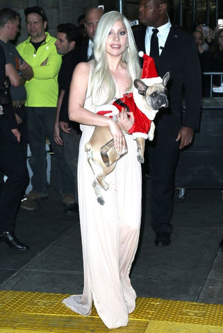 Lady Gaga and her French Bulldog