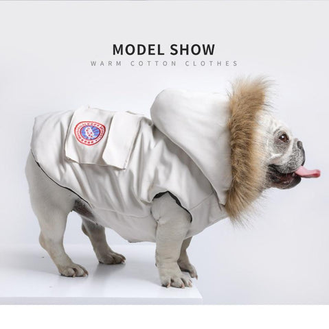 Trendy Winter Clothes for French Bulldog