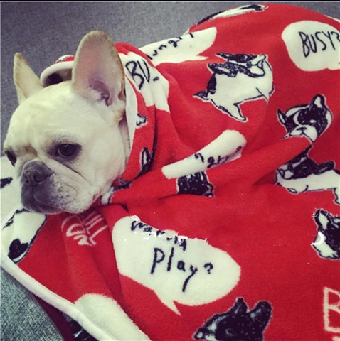 Wanna Play Frenchie Blanket