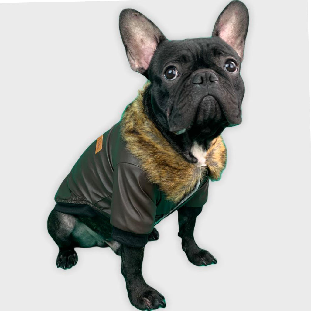 Stylish Leather Coat for French Bulldog (WS74) - Frenchie Bulldog Shop