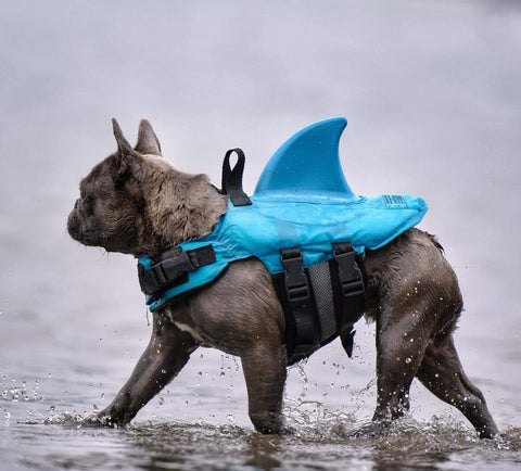 Shark Life Vest V2 - frenchie Shop