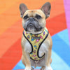 Summer Vibes - French Bulldog Harness with Free Leash (WS90)