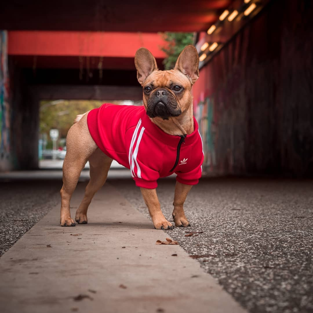 French Bulldog Hoodie (WS50) - frenchie Shop