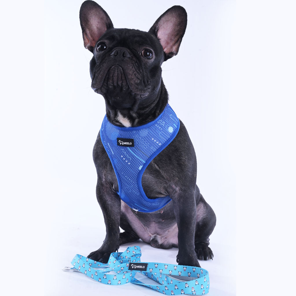 BlueHarmony - Frenchie Harness By MeeLo - Frenchie Bulldog Shop