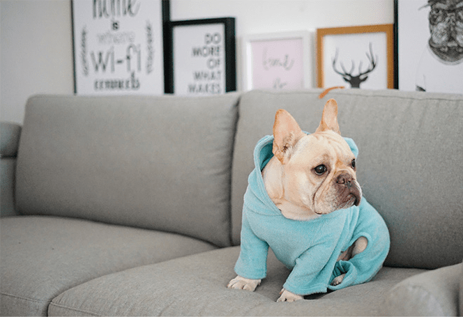 Not My Fault - Hoodie for Frenchie (WS8) - frenchie Shop