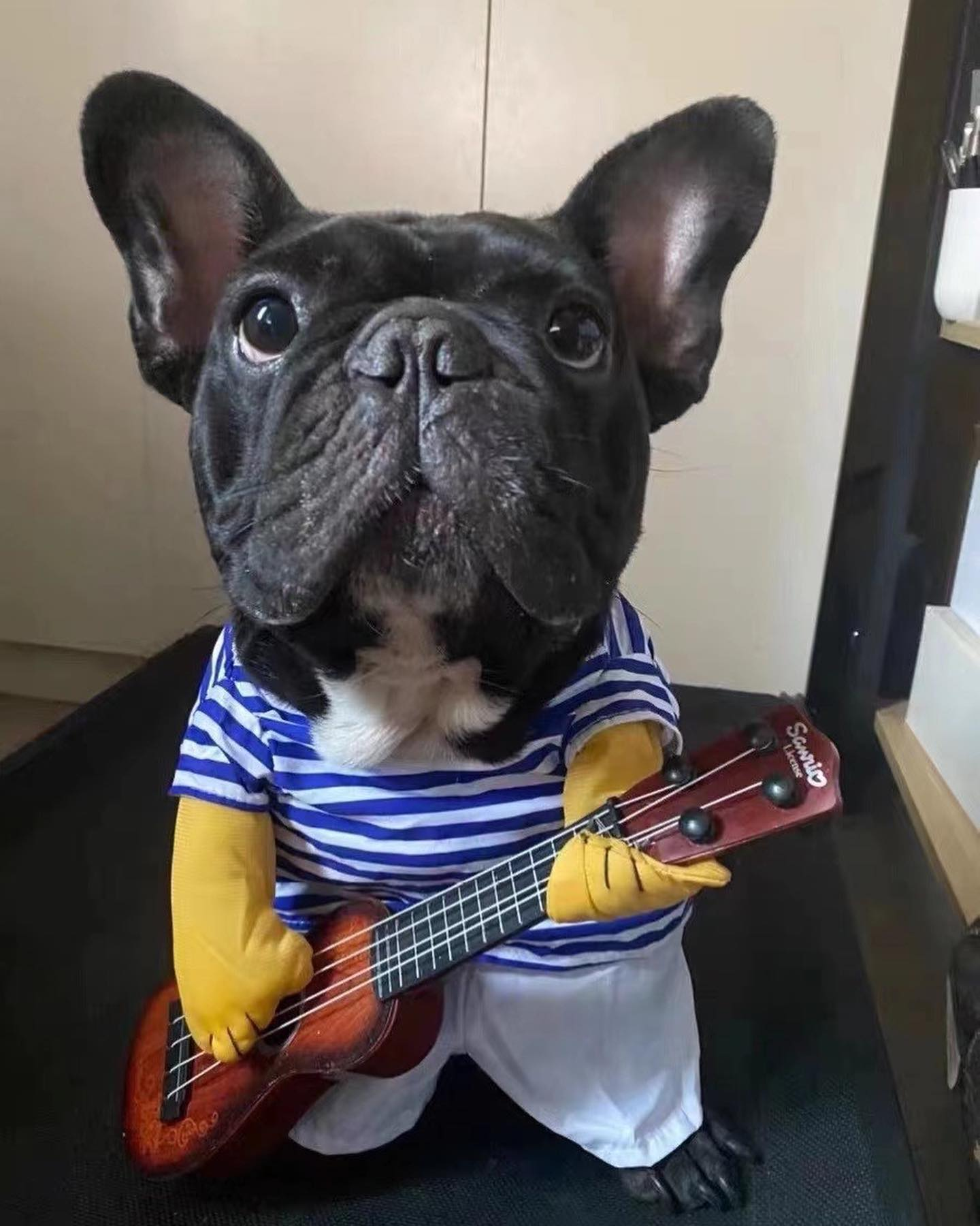 The Guitarist - Halloween Custom - Frenchie Bulldog Shop