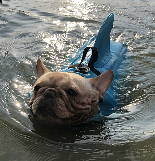 Shark Life Vest V2 (CS02) - Frenchie Bulldog Shop