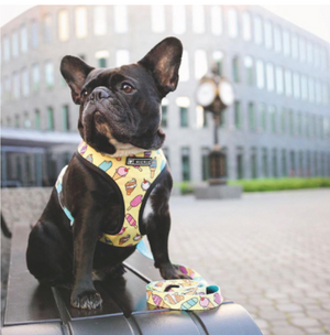 Summer Vibes - French Bulldog Harness with Free Leash (CS13)