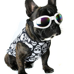 Skull Pattern - Shirt for Frenchie - frenchie Shop
