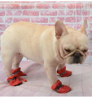 Warm Boots for frenchies (WS29) - frenchie Shop