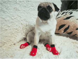Socks for frenchies