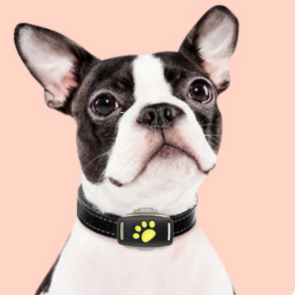 Findefy Pro :  Dog GPS Tracker - frenchie Shop