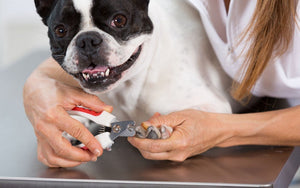 Professional Nail Clipper for frenchies - frenchie Shop