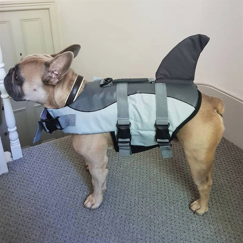 Jacket Swimwear for French bulldogs : Shark life vest (WS57) - frenchie Shop