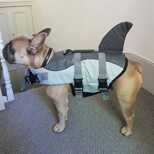 Jacket Swimwear for French bulldogs : Shark life vest - frenchie Shop