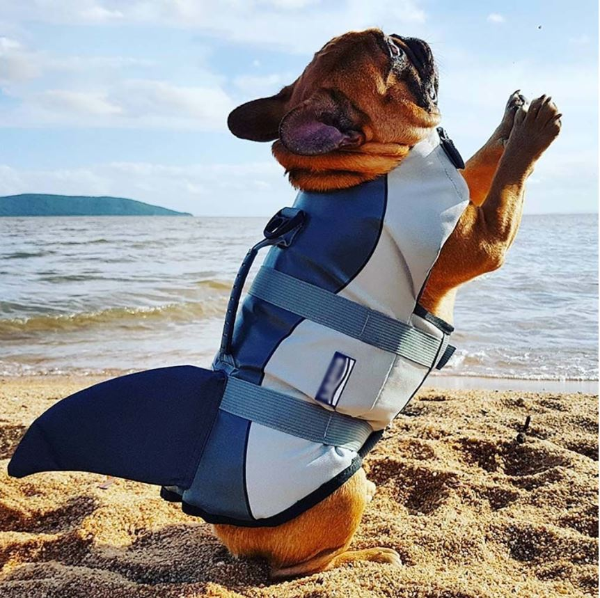 Jacket Swimwear For French Bulldogs Shark Life Vest