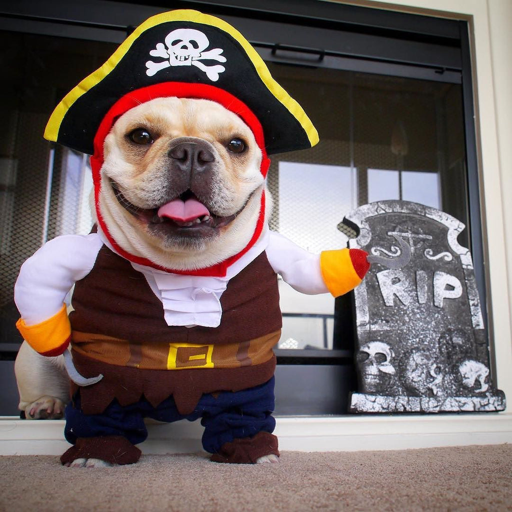 Halloween Costume Pirate - Frenchie Bulldog Shop