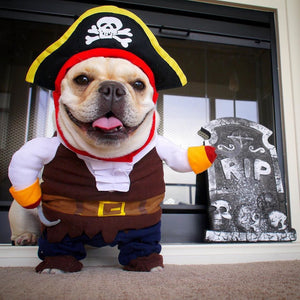 Halloween Costume Pirate - frenchie Shop