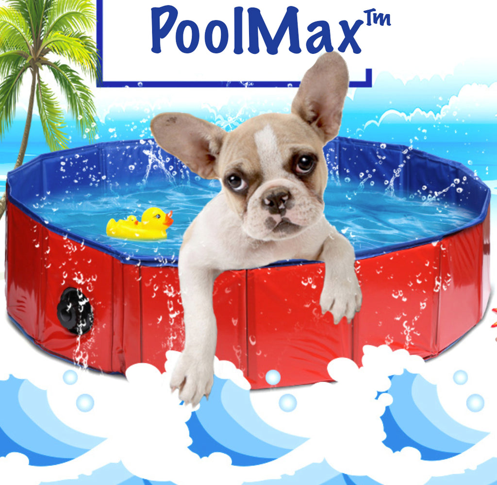 PoolMax TM : Foldable Swimming Pool for pet