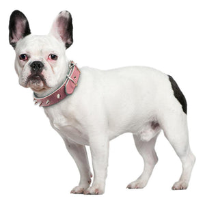 Adjustable Collars (WS61) - Frenchie Bulldog Shop
