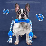 Tooth Cleaning for Frenchies - frenchie Shop